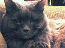 This was how Pickles looked most of the time: annoyed.